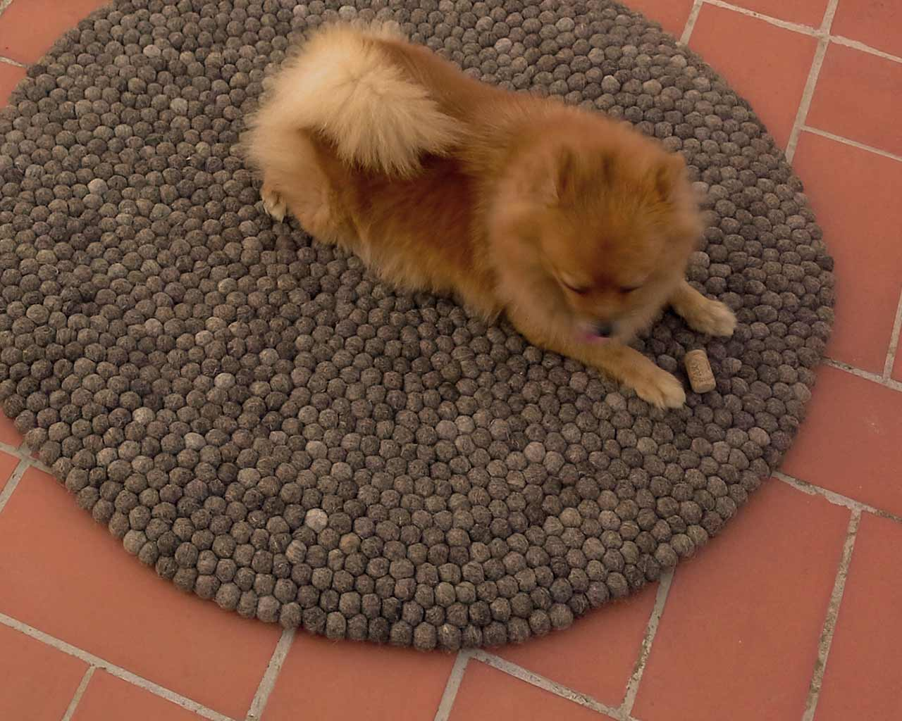 outside small dog nature rugs