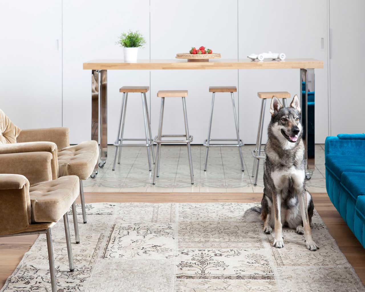 spectacular apartment beautiful dog